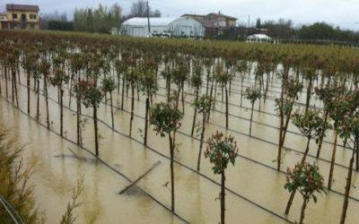 """Lori: """"il Governo risarcisca il settore agricolo per i danni climatici"""""""