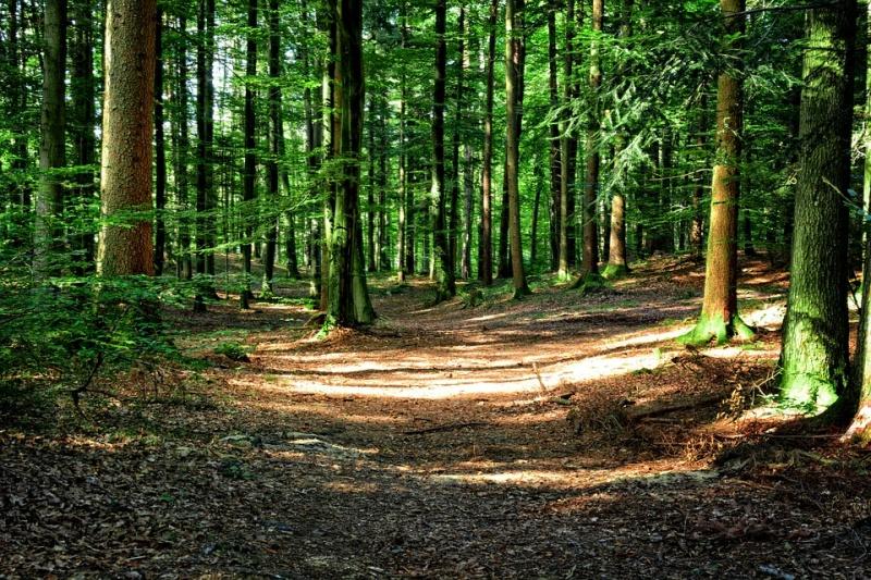 Via ai corsi di alta formazione per istruttore forestale